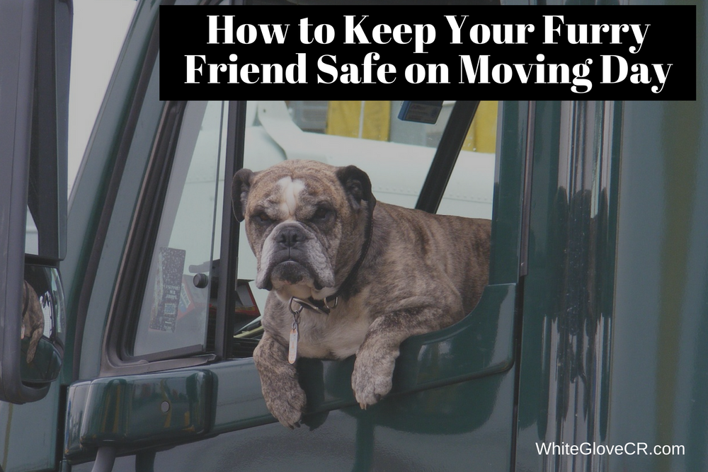 How to Keep Your Furry Friend Safe on Moving Day