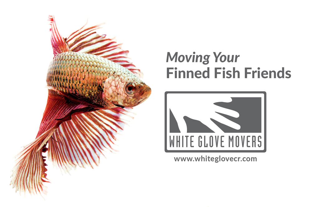 Moving your finned fish friends