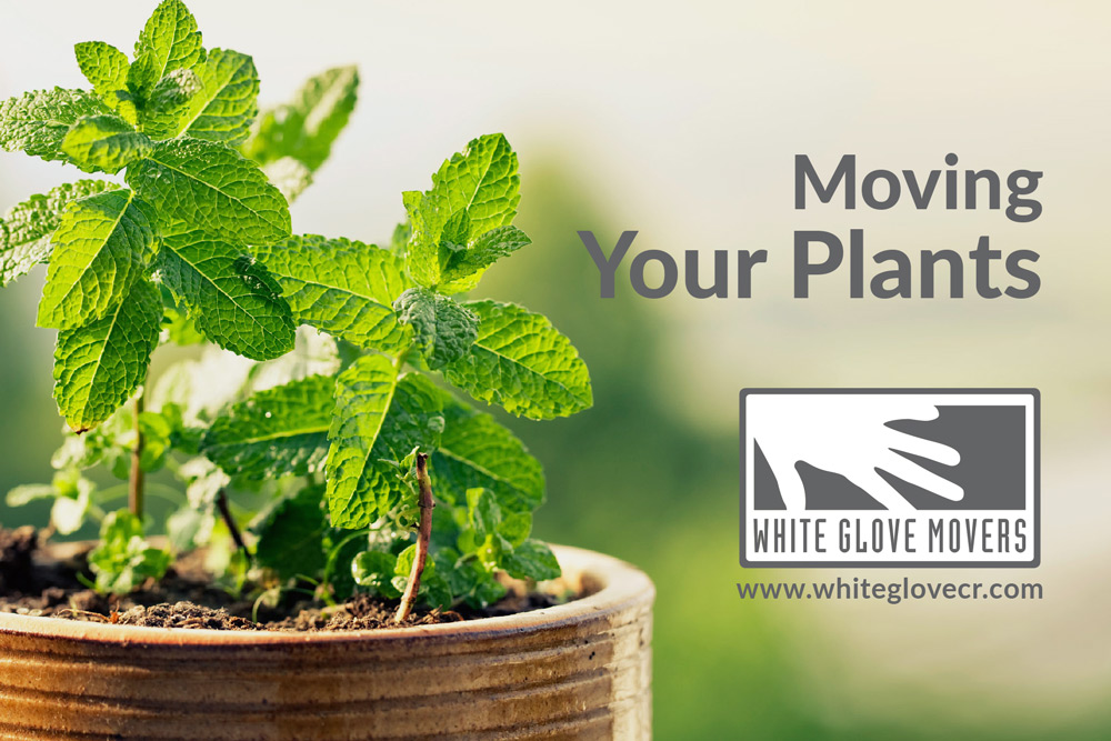 Moving Your Plants?