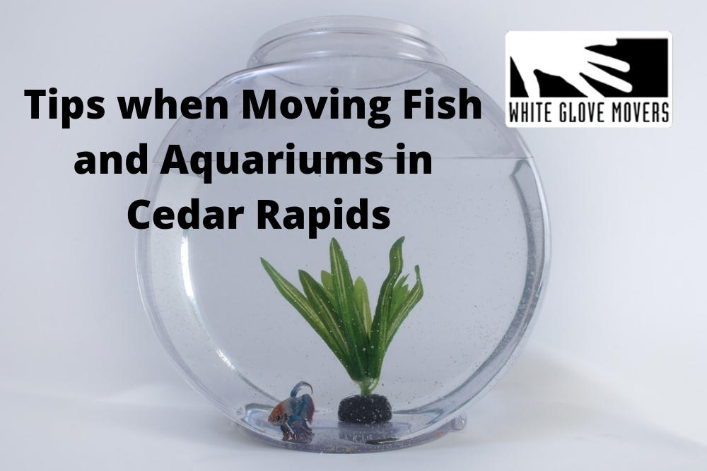 Tips when Moving Fish and Aquariums in Cedar Rapids