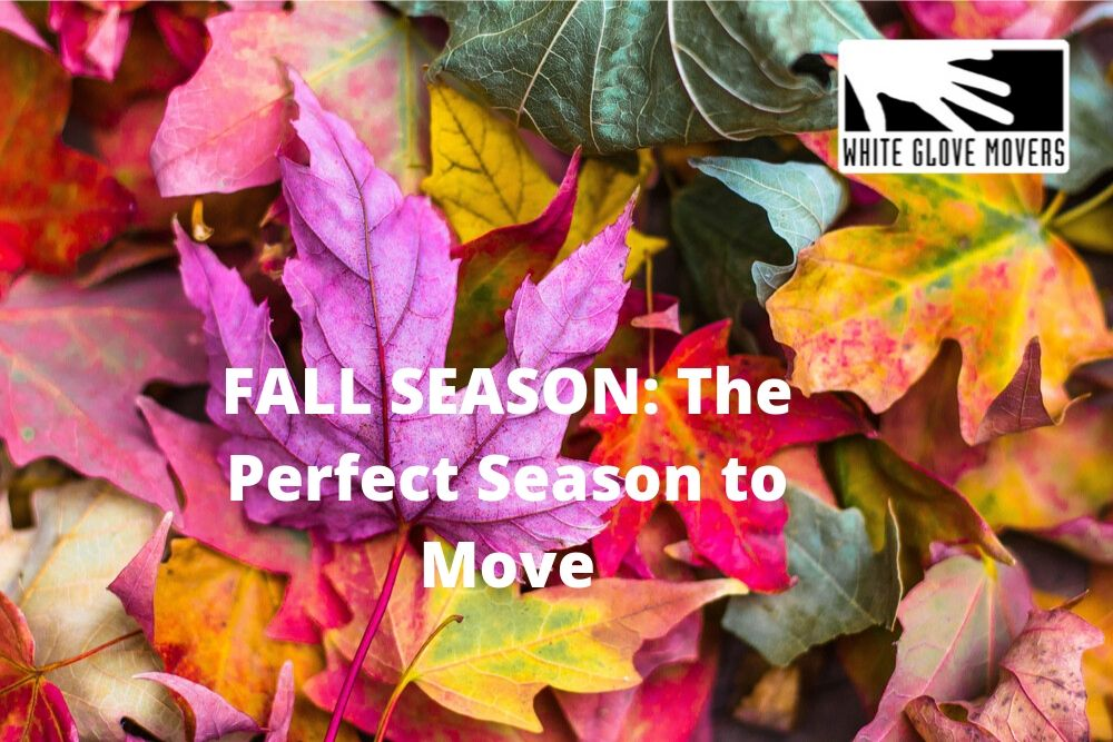 FALL SEASON: The Perfect Season to Move